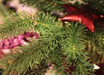 vianočný stromček ihličie