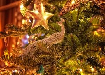 vianočná hviezda