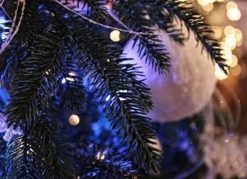 modrý vianočný stromček